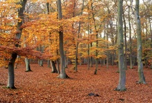 Laeacco Autumn Photographic Backgrounds Forest Fallen Leave Tarpet Scenic Baby Photocall Photo Backdrops For Studio