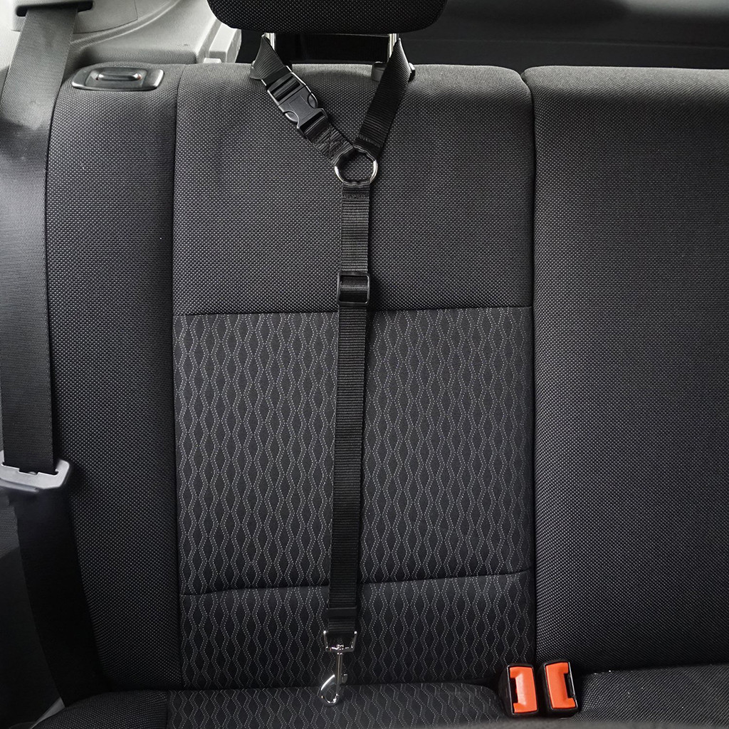 seat belt for dog in car