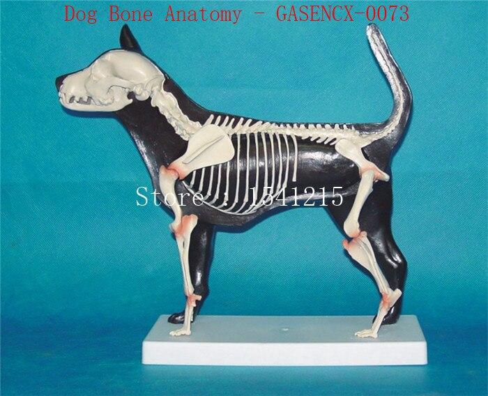 Modèle d'anatomie squelette Animal aides pédagogiques médicales vétérinaires modèle pour animaux de compagnie chien anatomique os de chien anatomie-GASENCX-0073