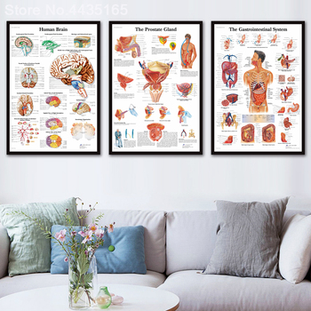 HD Wall Art Human Body Anatomy Poster Anatomie System Chart Body Map Canvas Painting Picture Print Decorative Home Decor