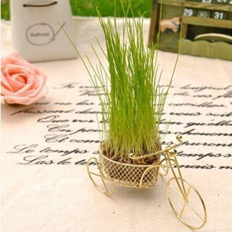 DIY Potplanten Love Fietsen Little Green Potted Plant Mini Office - Tuinbenodigdheden
