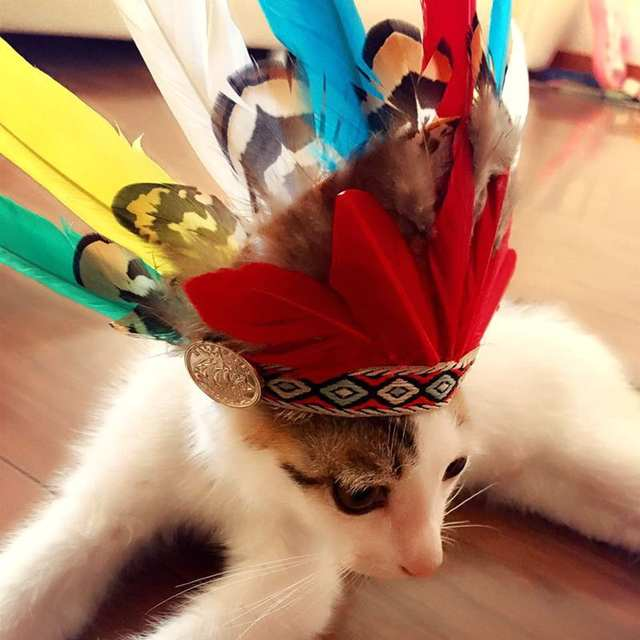 46acfc70474 placeholder 1 Piece Indian Style Feather Decoration Hat Adjustable Pet Dog  Cap Small Dog Halloween Costume Festival