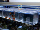 Suspend aquarium arcylic guppy baby small fish separation breeding box sick fish air promote