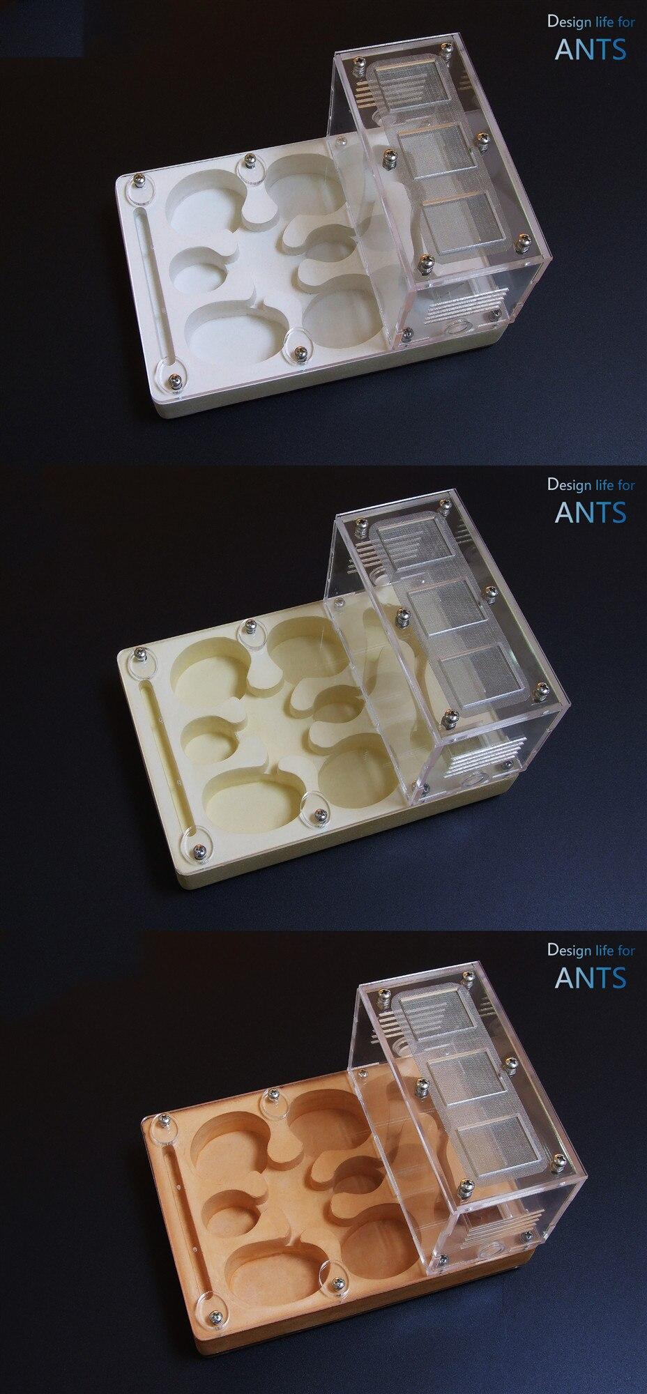 flat-ant-nest (4)