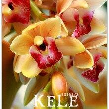 Big Sale!Rare Cymbidium Seeds Yellow Cymbidium Faberi Potted Plants Flower Seeds Orchid – 100 Seeds/Lot,#TFLHTZ