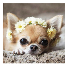 sale Diamond Embroidery chihuahua dog Diy Painting Cross Stitch birds Full Square Round Pictures Of Rhinestones ZP-300