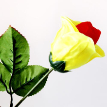 Color changing rose please girl attract girl s attention magic tricks