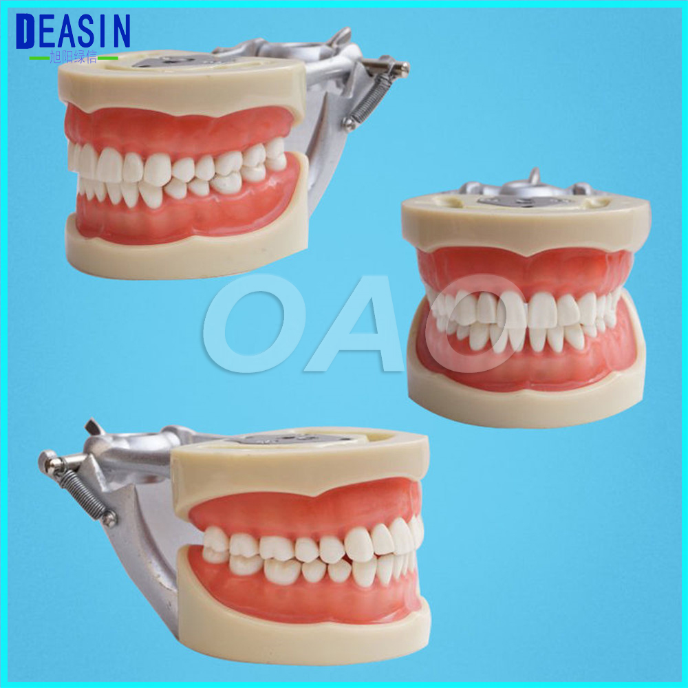 Teeth Teaching Model dentist student learning model Dental Soft gingiva 200H Type Removable Teeth free shipping good quality dental soft gum teeth model with tougnetypodont w 32 removable teeth nissin 200 compatible