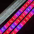 DC12V 100CM SMD5630 Led bar rigid strip IP68 waterproof Grow Light Red Blue 5:1 and 3:1 for Aquarium greenhouse Hydroponic plant