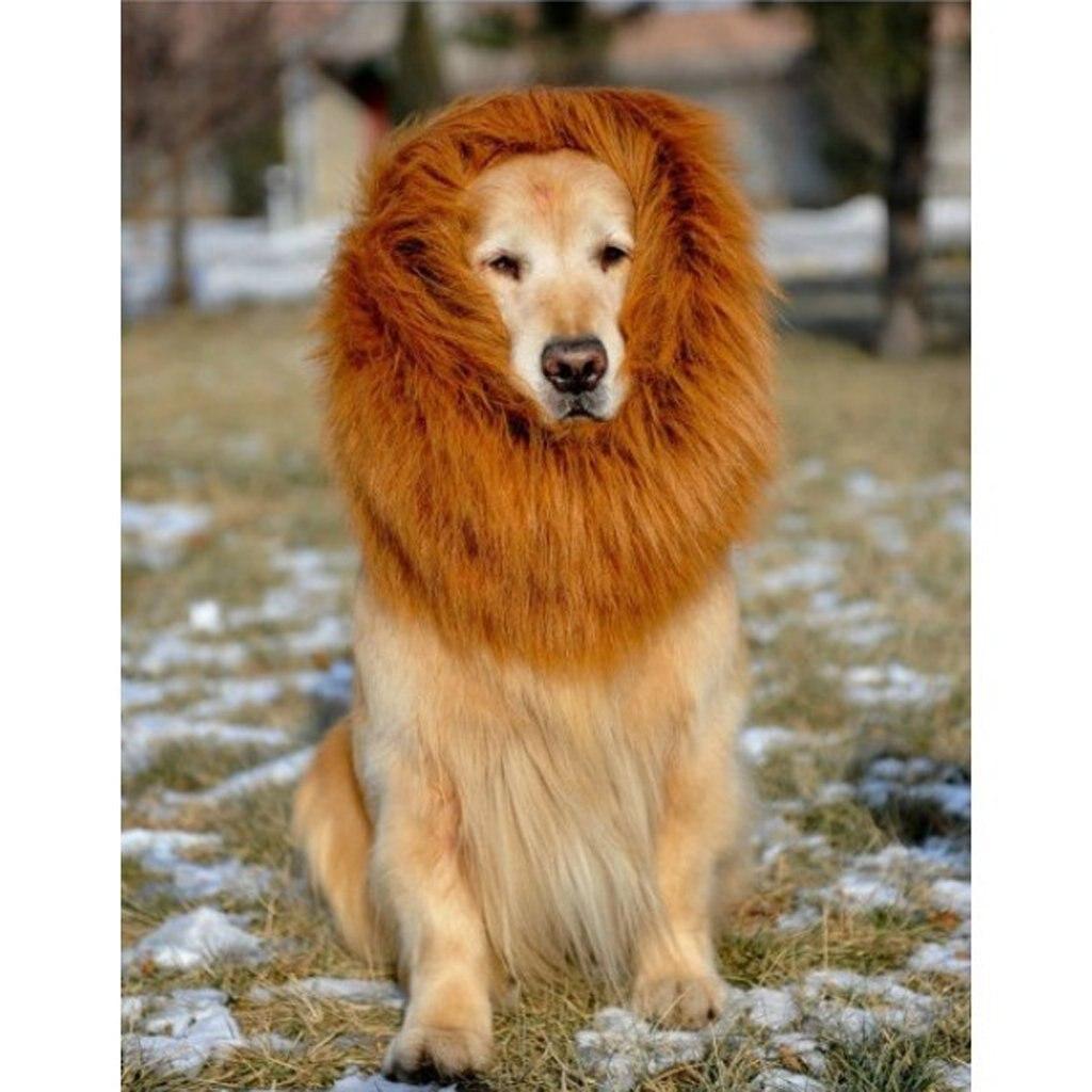 Large Dog Breed Looks Like Lion