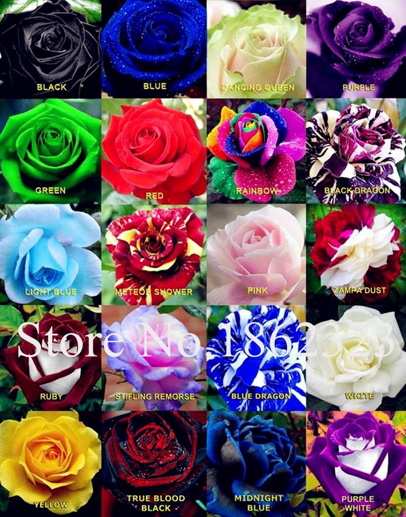 Hot Sale 200 Pcsbag Rare Color Rose Bonsai Plant Rose Seedsflower