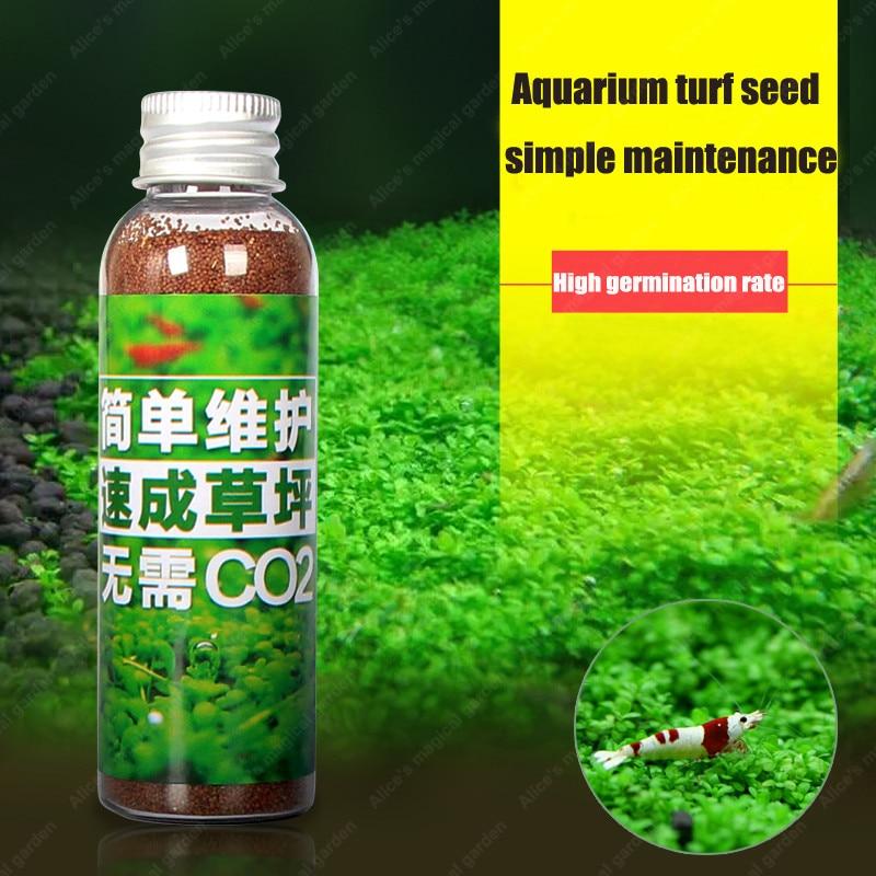 45g 1 bottle, Aquarium Plants Glossostigma Hemianthus Water Aquatic Fish Tank Ornamentals Landscape Decoration Plant