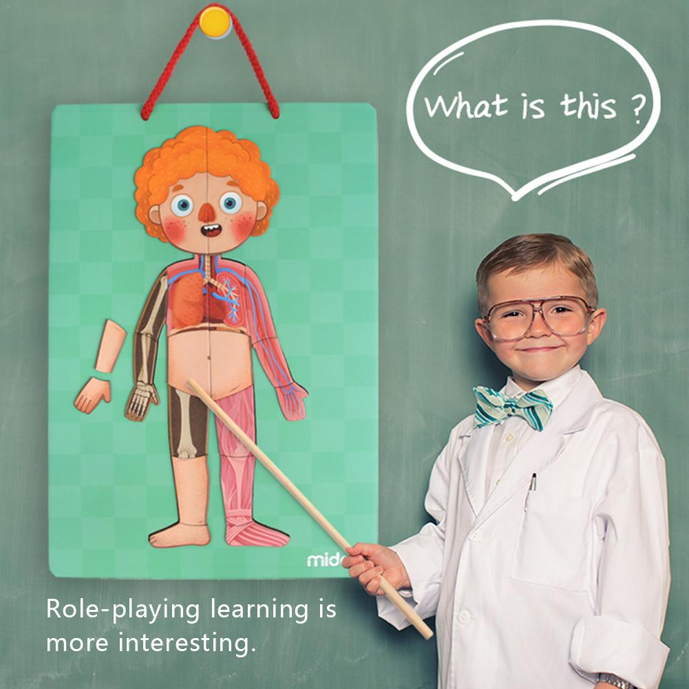 79 pièces/ensemble jouets éducatifs d'apprentissage précoce pour enfants Structure du corps humain magnétique Puzzle cognitif 4 couches pour garçons et filles