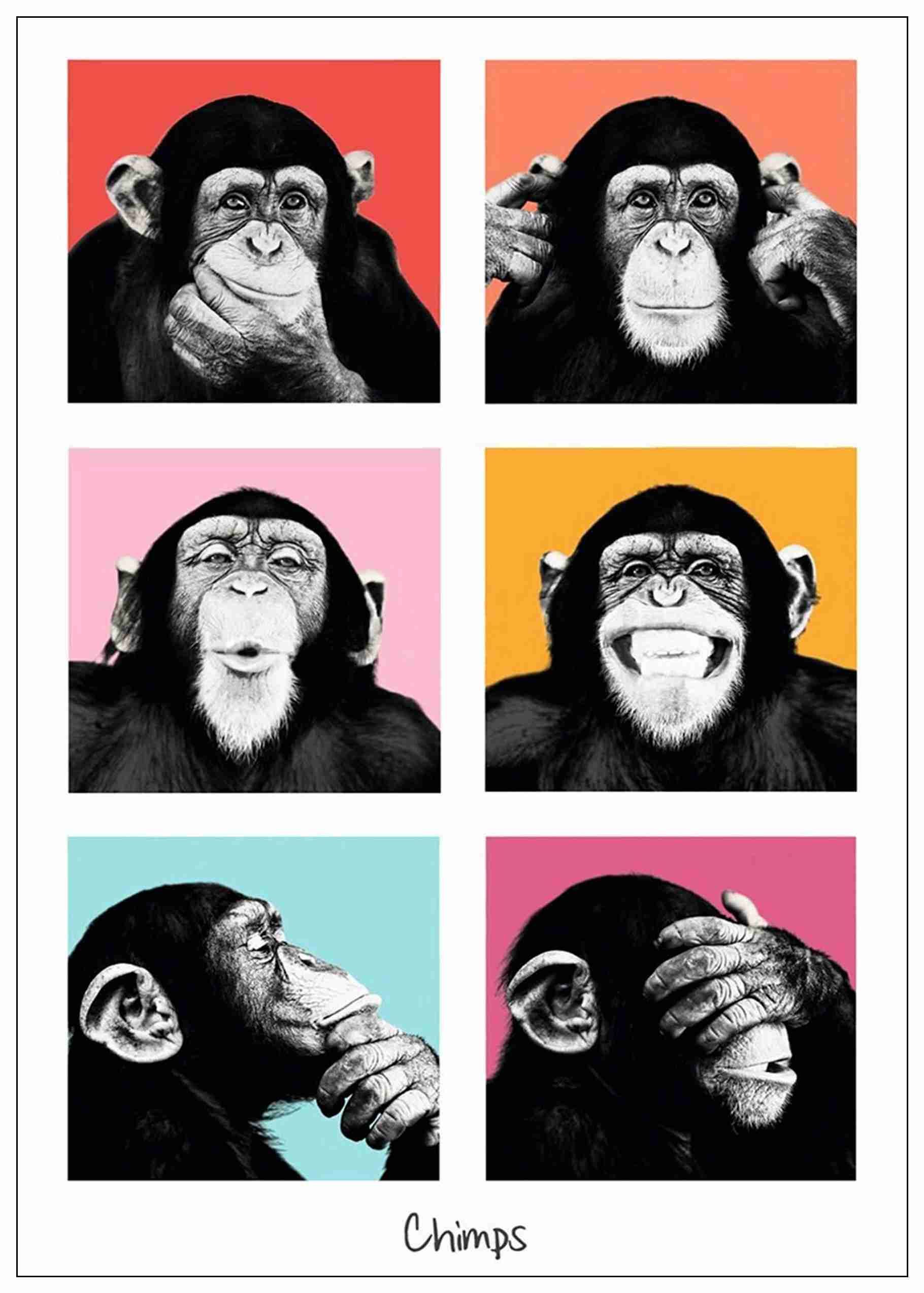 Gorilla Adornment Posters Home Room Decor High Quailty Printing Wallpaper Modern Decoration In Wall Stickers From Home Garden On Aliexpress Com Alibaba