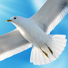 3D Stereo Blue Sky White Clouds Dove Nature