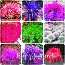 200 pcs Graines Purple Blue Fescue Grass bonsai Indoor Garden Festuca Perennial Hardy Ornamental Plants Easy Grow bonsai planten(China)