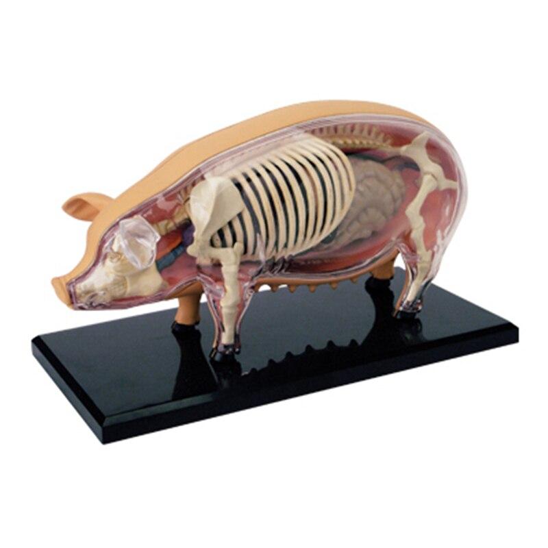 4D Pig Intelligence Assembling Toy Animal Organ Anatomy Model Medical Teaching DIY Popular Science Appliances