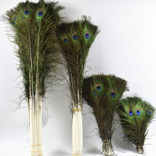50 Pcs/Lot Natural Real Peacock Feathers for Crafts 25-80cm Peacock Feather Home Hotel Decor Wedding Decoration Plumes plumas