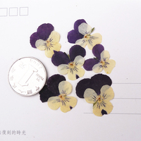 Small Purple Pansy DIY Handmade Material Dried Press Flower 1 Lot 100pcs Wholesale Free Shipment