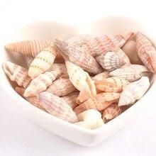 Cute Decorative Natural Mediterranean Seashells