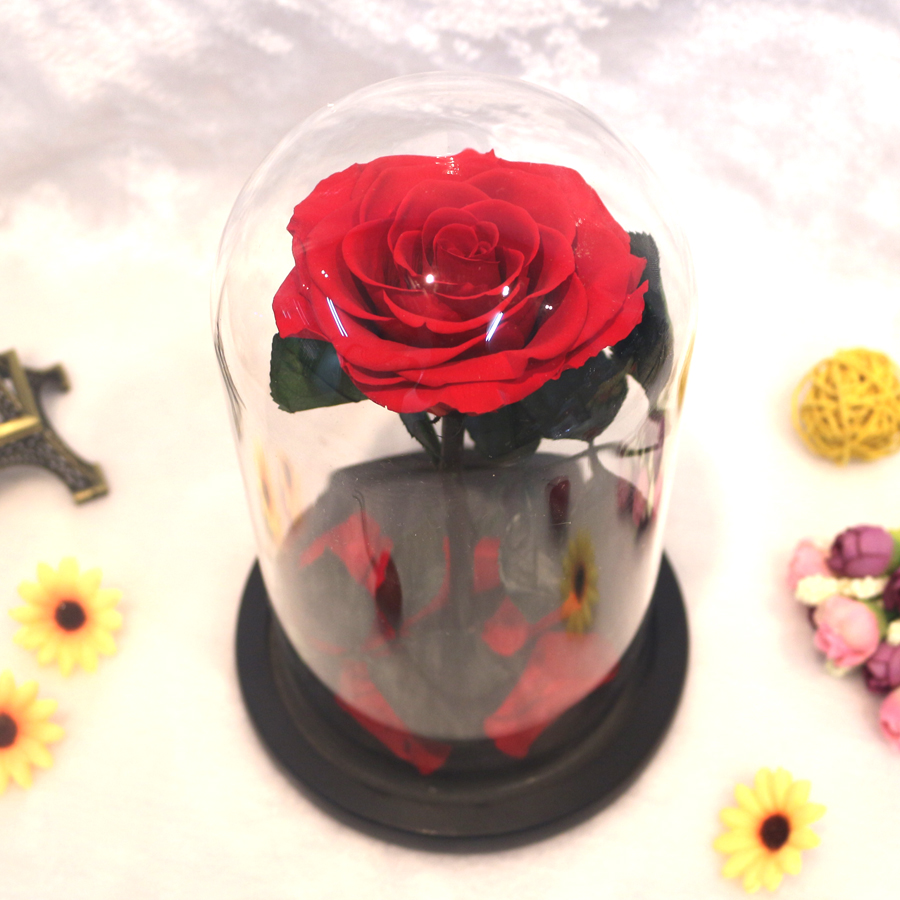 2af6897e229 O Pequeno Príncipe Tampa De Vidro Rosa Preservada Flor Imortal Rosas  Vermelhas para o Dia Dos Namorados