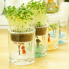 Agent seasons cup miniature potted houseplants Decoration lazy glass pot plants a generation of fat