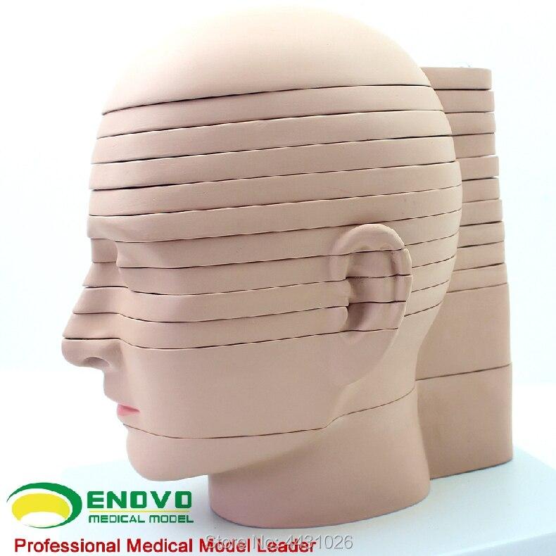 ENOVO Cerveau cerveau section modèle dans humaines médicales. cerveau CT IRM du cerveau imagerie par résonance magnétique