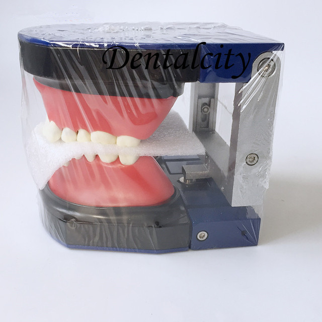 Dental tools instrument Dental M8017 Typodont Teeth Model/Orthodontic SteelTeeth Model