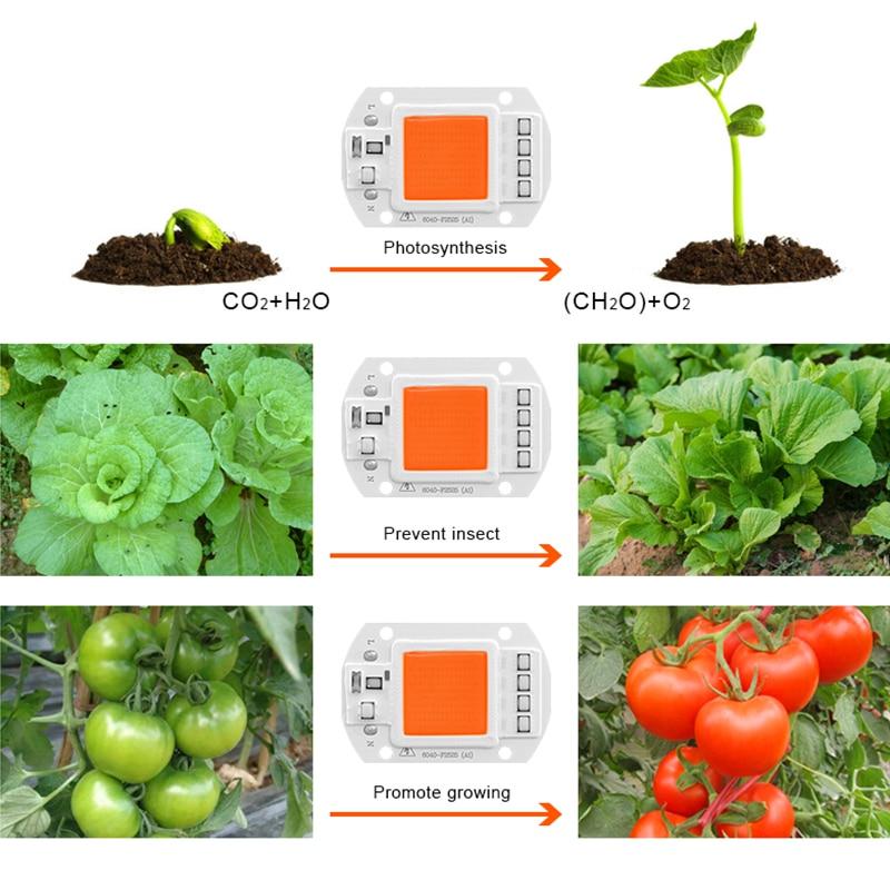 Светодиодный Grow COB Чип Фито лампа полного спектра AC220V 110V мощностью 10 Вт, 20 Вт, 30 Вт, 50 Вт, ручная сборка для комнатных растений рост рассады и цветок роста растений фитолампа
