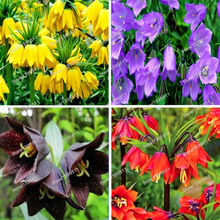 1bag=100pcs Crown Imperial bonsai plant 5 colors Fritillaria Imperialis Premier Easy To Grow Home Garden Ground Cover Plant семена imperial garden