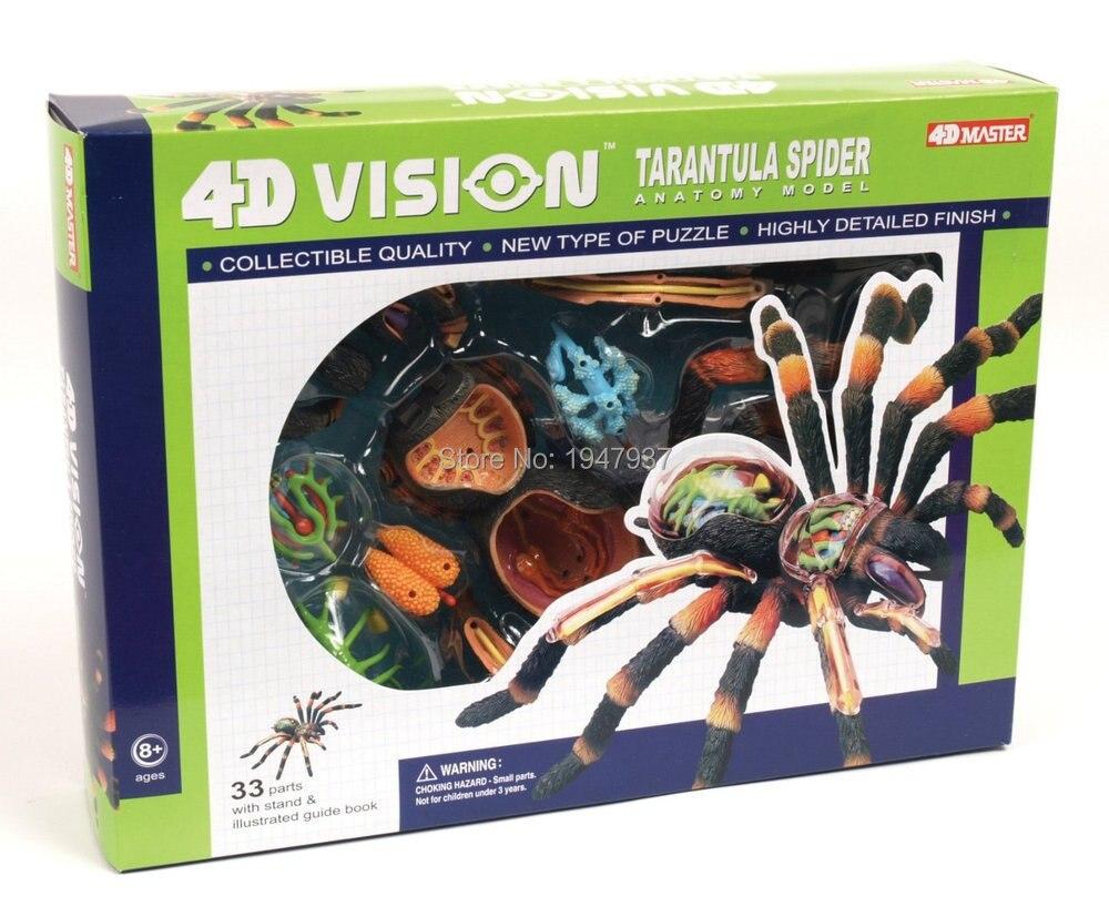 Maestro 4D visión esqueleto anatomia Tarantula araña esqueleto ...