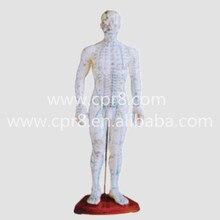 BIX-Y1007 Male Body Acupuncture Model (50CM) Australia Freight Free, AU Freight Free WBW280