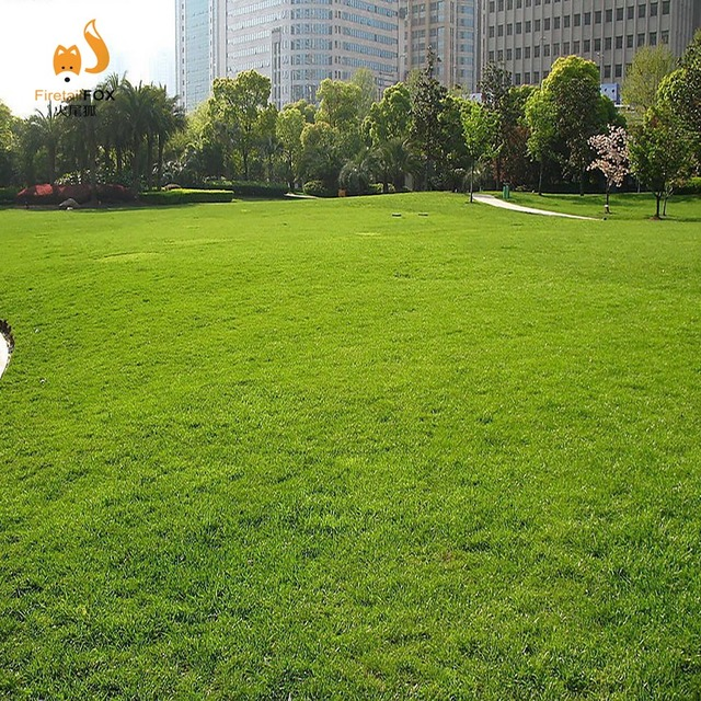Grass Seed Lawn Seed Donu0027t Clip Sijiqing Wholesale Hardy Stadium Seed For Four  Seasons