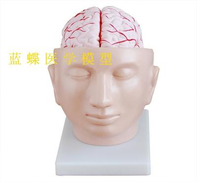 Model of head attached cerebral artery The brain model  PVC material free shoppingModel of head attached cerebral artery The brain model  PVC material free shopping
