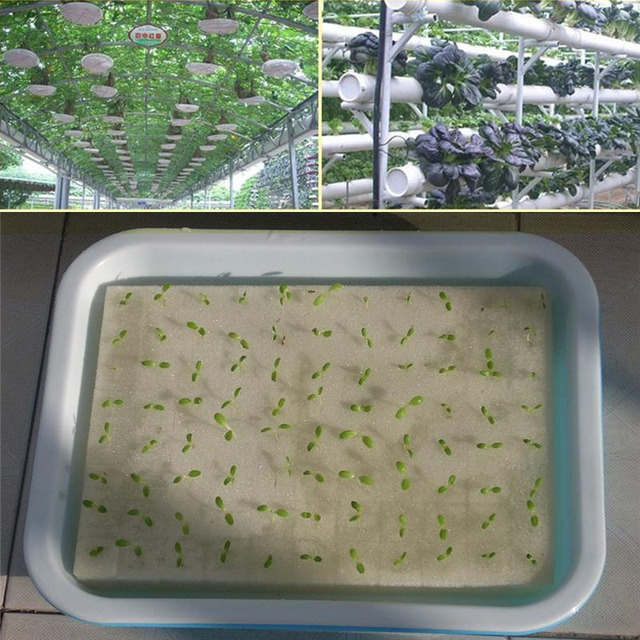 Hydroponic Seedlings Planters Cultivation Plant Vegetable 100pcs Sponge