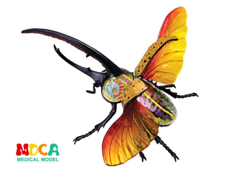 ヘラクレスカブトムシ 4d マスターパズル組立おもちゃの動物生物学オルガン解剖モデル医療教育のモデル  グループ上の オフィス用品 & 学用品 からの 医療科学 の中 1