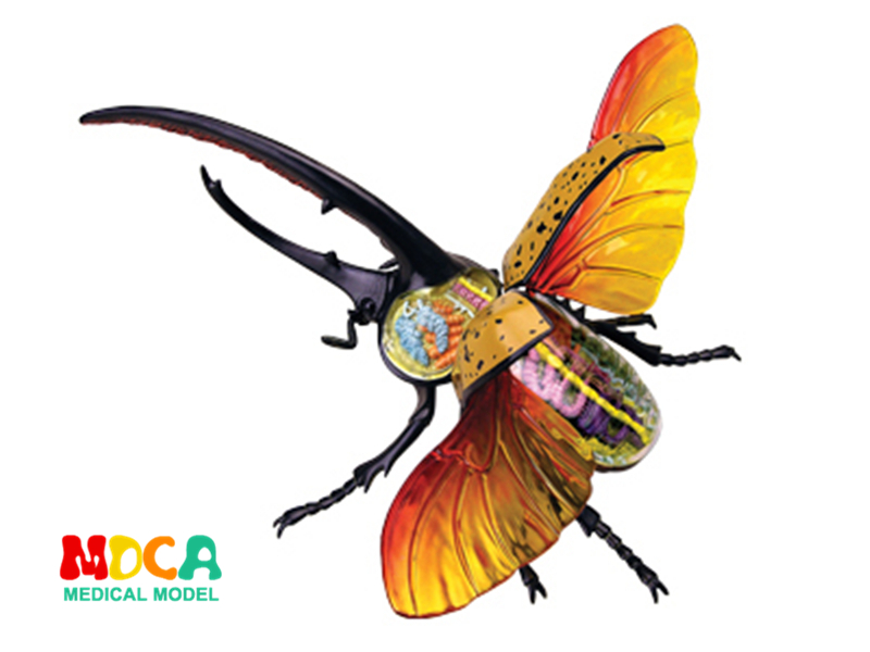 Hercules beetle 4d master puzzle Assembling toy Animal Biology organ anatomical model medical teaching model 4d master cat puzzle assembling toy animal biology organ anatomical model medical teaching skull skeleton model science toys