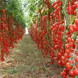 Горячая Распродажа ограниченное по времени время регулярные инновационные растения горшки плантаторы растений Новинка! 200 шт