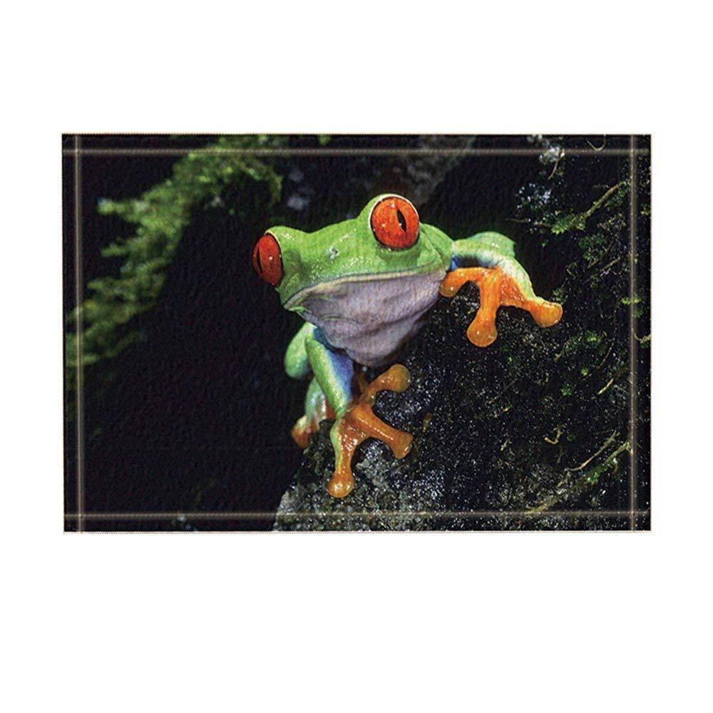 Wild Animal DecorSafari Red Eye Frog Lying On Slippery