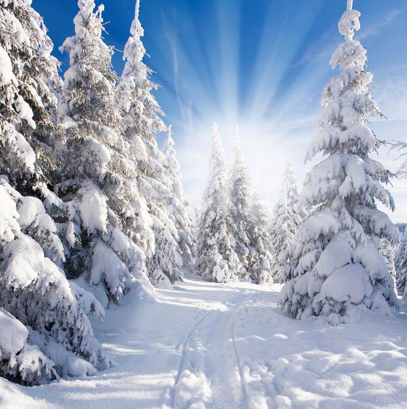 10x10ft white snow pine forest trees sunshine winter for Sfondi invernali per desktop gratis