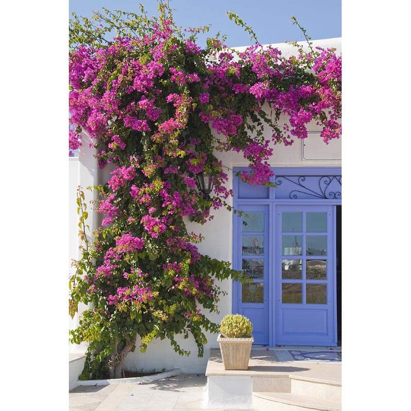 Purple flower house photo background home garden photography backdrops for photo studio fotografia backgrounds F-2122 600cm 300cm backgrounds garden beautiful sunshine photography backdrops photo lk 1566