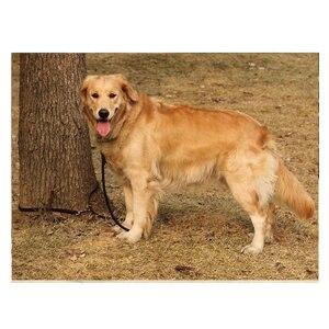 Image 5 - Многофункциональный поводок из 100% натуральной кожи для домашних животных, X см