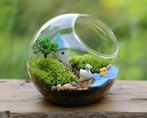 Aliexpress.com : Buy Mkono Glass Vase Air Plant Terrarium Airplants  Container Succulent Terrariums Plants Planter Table Display Decorative,  Globe from ... - Aliexpress.com : Buy Mkono Glass Vase Air Plant Terrarium