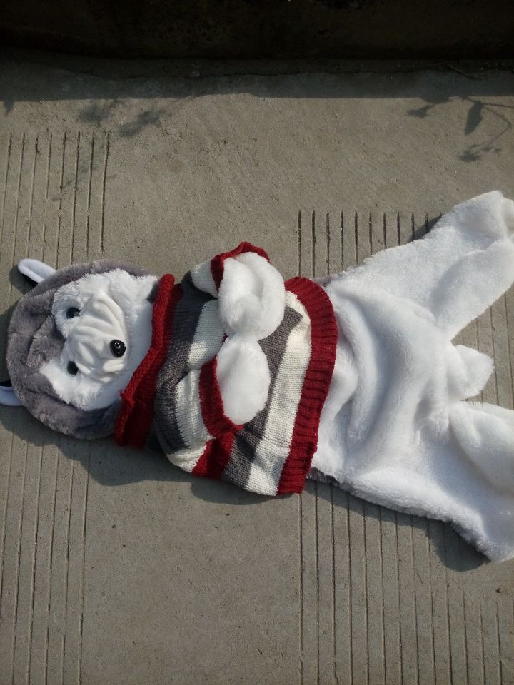 70cm Husky dog skin plush toys, teddy bears hull. Large animal coat factory wholesale 120cm teddy bear hull plush toys teddy bears hull large animal coat wholesale there is no filling free delivery