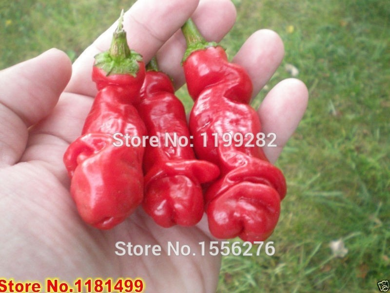 Ponak New 200pcs Penis Chili Gem/üsesamen f/ür sch/önen Gartenmehrfarbiges