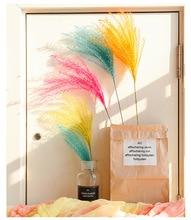 50 cm Natürliche Getrocknete Blumen Reed Blume Bouquet für Hochzeit Hause DIY Dekoration Fotografie Kulissen Schießen Foto Schmuck