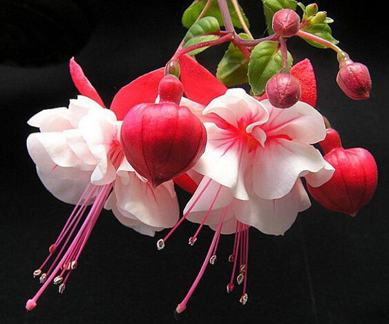 online get cheap chinese flowers aliexpress  alibaba group, Beautiful flower