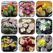 100pcs Wholesale 100% authentic Mix Lithops Succulent Plants  rare plants, Bonsai organic