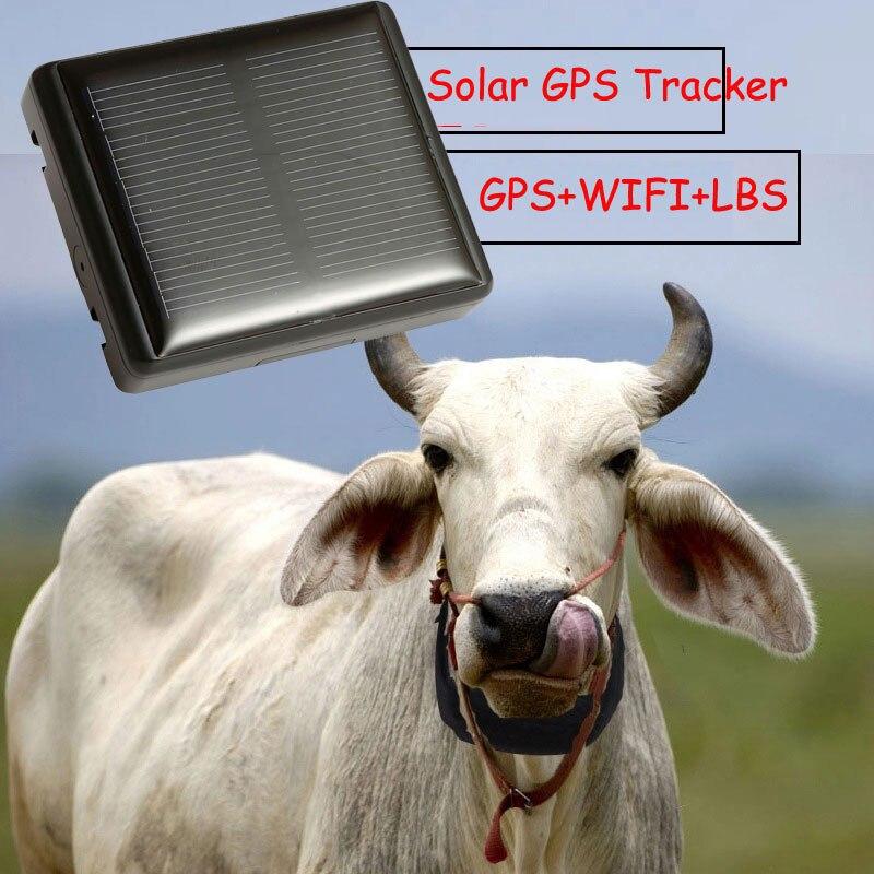 Imperméable à l'eau Animal GPS Tracker solaire ne jamais éteindre pour vache mouton Animal de compagnie avec collier enlever alarme emplacement en temps réel LBS suivi
