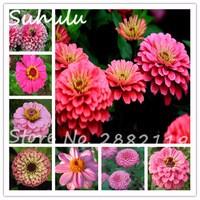 50seeds-bag-Rare-Pink-Zinnia-Seeds-Pretty-Pastel-Colors-Beautiful-Flower-Seeds-DIY-home-garden-decoration.jpg_200x200
